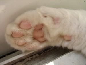 猫14猫の手