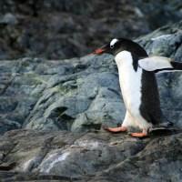 葛西臨海水族園のペンギンに心奪われる!季節で変わるペンギンたち