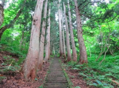 大山祇神社 木の根坂