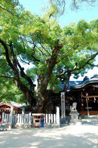 石切劔箭神社 天然記念物