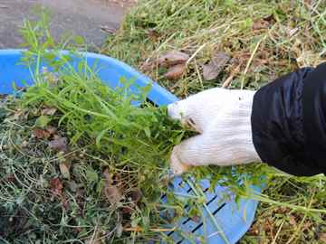 須恵町 一軒家 庭の草引き|えびす造園