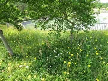 春日市 一軒家 庭の草抜き|えびす造園