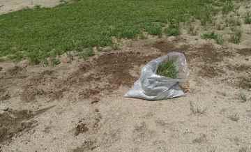 福津市 一軒家 庭の草抜き えびす造園