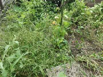 粕屋町 一軒家 庭の草抜き|えびす造園
