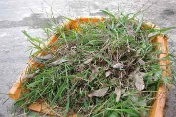 筑紫野市 一軒家 庭の草抜き|えびす造園