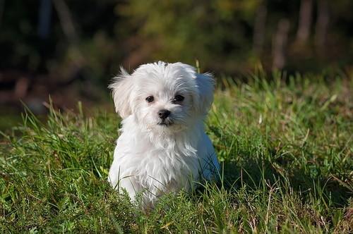 かわいいメス犬名前ランキング