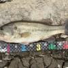 冬こそデカバス減水野池だから釣れる