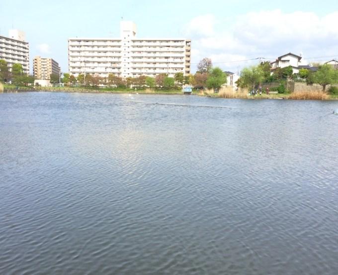 150411西の堤池3