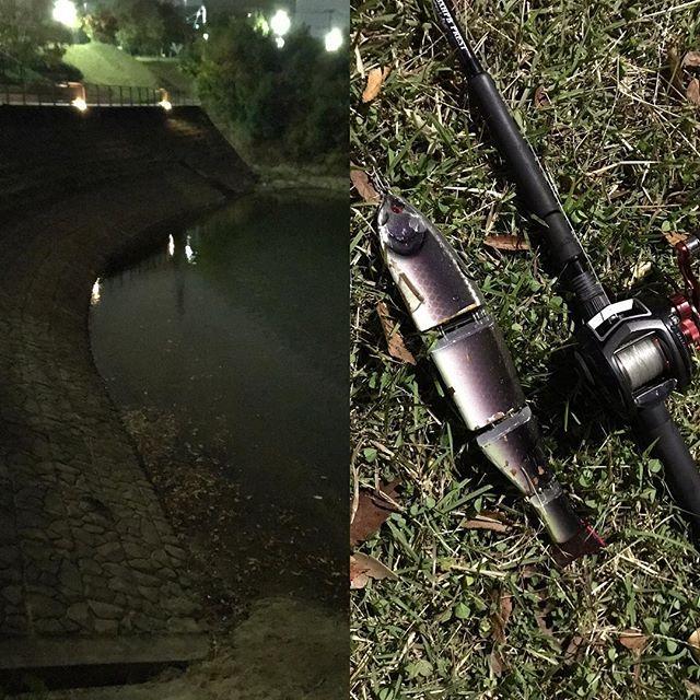ジャイアント深夜合宿 風が池全体に吹き付けてる状況の中デカバスが休憩してるのはここだろ!っていう風が入りにくいワンドのさらに微風をも遮ぎる水中枝の裏。ジャークジャークジャークのショートジャークからのジャーク…最悪!枝にスタックはい終了。1投で終わり。枝ぶりを日中チェックしに行くかな。水も回復傾向で+50cmってところでした。まだまだ深夜合宿は続く