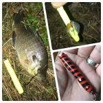 Keybow クルクルのシャッド使いでデカバスバラしました笑 #wildlures#Keybow#外来魚駆除反対