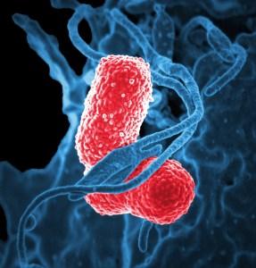 bacteria-811861_1920