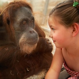 Orang-Utan Begegnung/ Foto: ZOOM Erlebniswelt