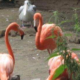 Zoo Duisburg Flamingos/ Foto: Ruhl