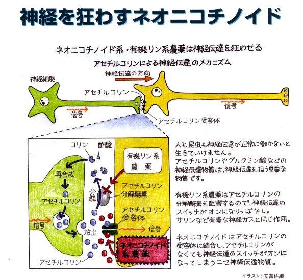 ネオニコチノイドイメージ図