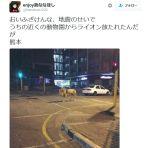 【超悪質】「地震で街中にライオンが放たれた」というデマツイートが流れる!