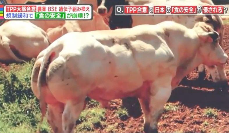 アメリカ 産 牛肉 ホルモン 剤