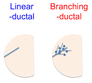 Ductal pattern