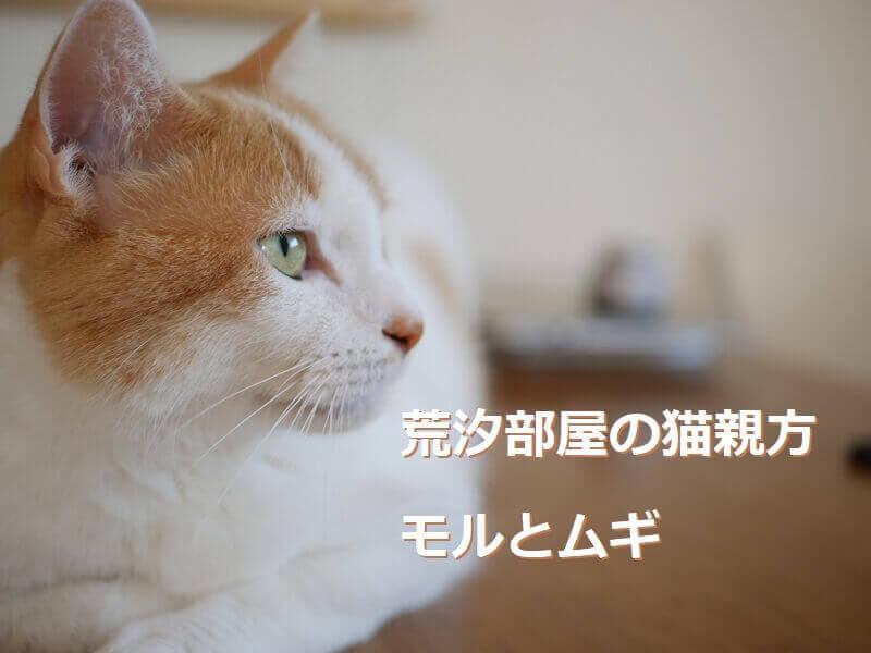 荒汐部屋の猫親方モルとムギアイキャッチ