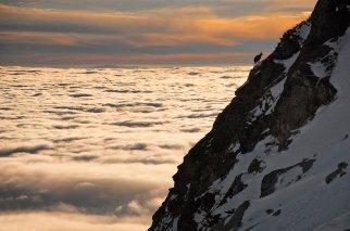 solitaria cabra trepa la montaña por sobre las nubes