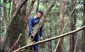 Aokigahara-bosque-suicidios-2