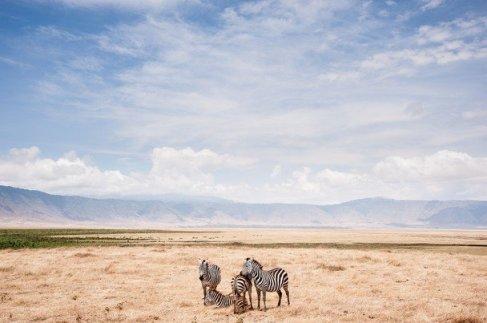 national-geografic-2014-zebra-Ngorongoro-Crater-Tanzania