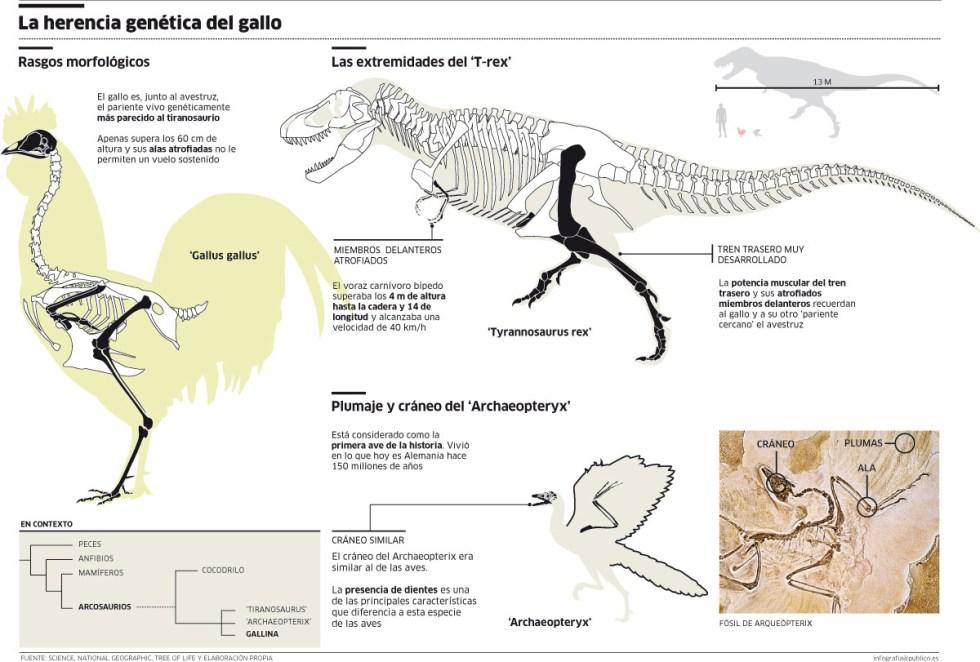 infografía-dinosaurio-gallina-tiranosaurio-ñoño