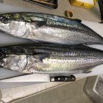 2018/2/15 釣り魚買取り サワラ、ヒラメ 千葉県 出張寿司職人