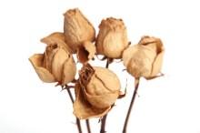 ドライフラワー プリザードフラワー 造花