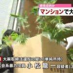 【大麻栽培】浅草高橋組 小松龍一容疑者を逮捕