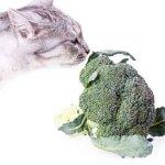 imagen de un gato comiendo brócoli, porque