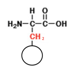 アミノ酸 基本 アラニン