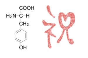 チロシン 分子量