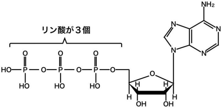 アデノシン三リン酸ATPの構造