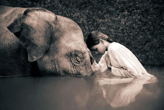 rumi_elephant