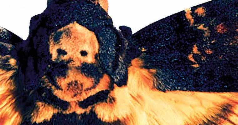 Lonely Kamel – Death's-Head Hawkmoth (Album)