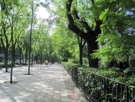 El Paseo del Pintor Rosales rodeado de verdor y bellos panoramas.