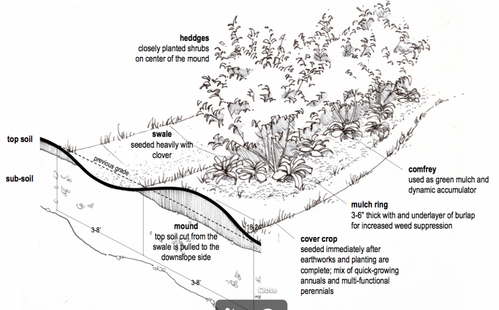 diagram of a rainforest in the undergrowth