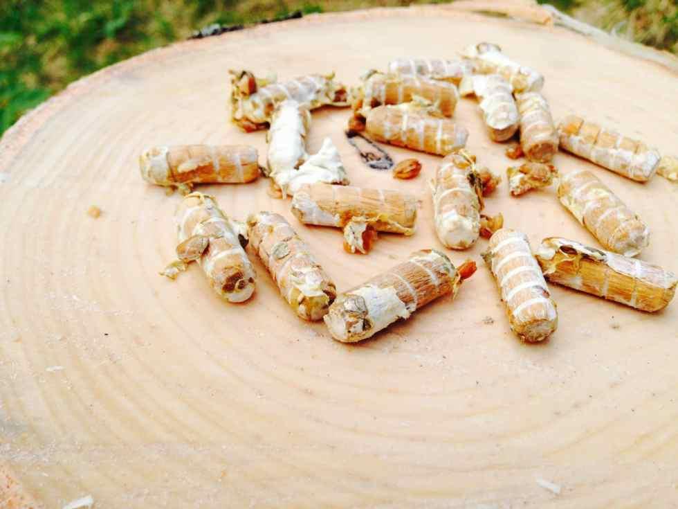 Vanliga träplugg inokulerade med svampmycel
