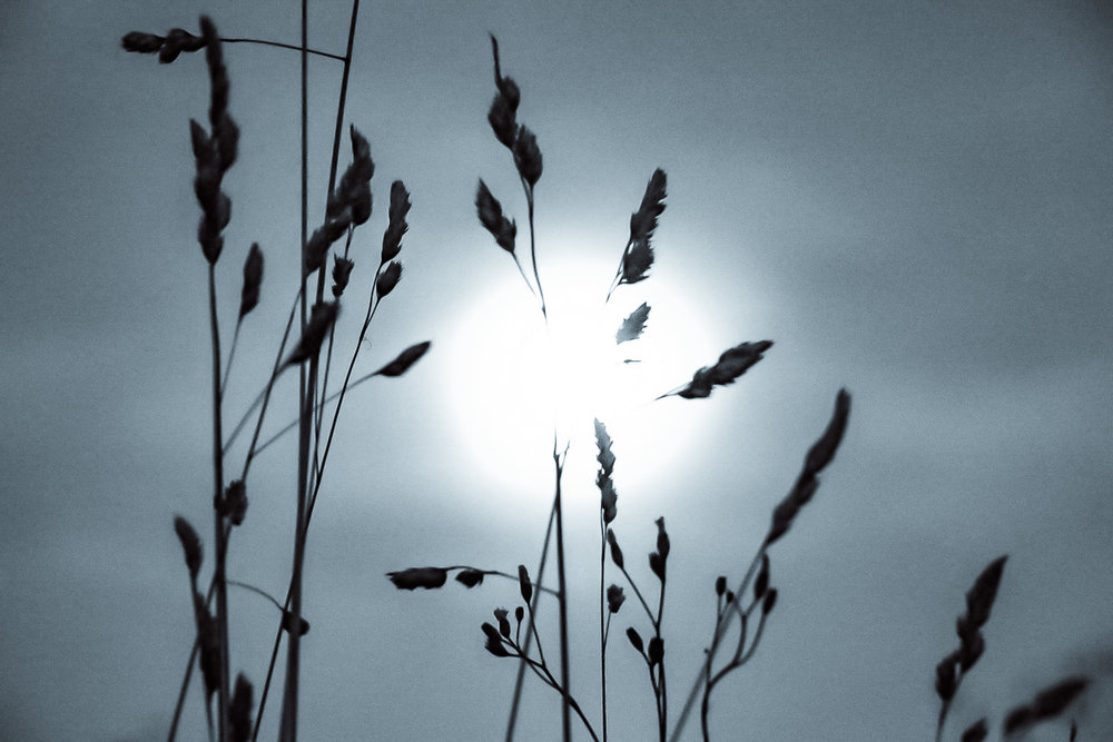 les brins d'herbe au clair de la lune