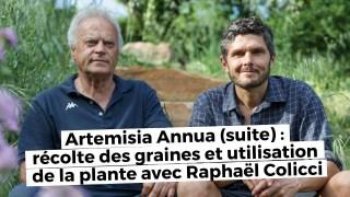 Artemisia Annua 2 : Récolte des graines et utilisation de la plante avec Raphaël Colicci