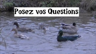 Posez vos questions…
