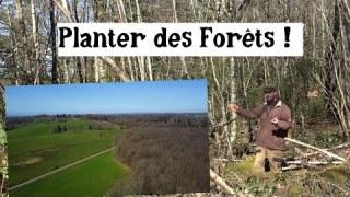 Les Forêts et la régulation climatique