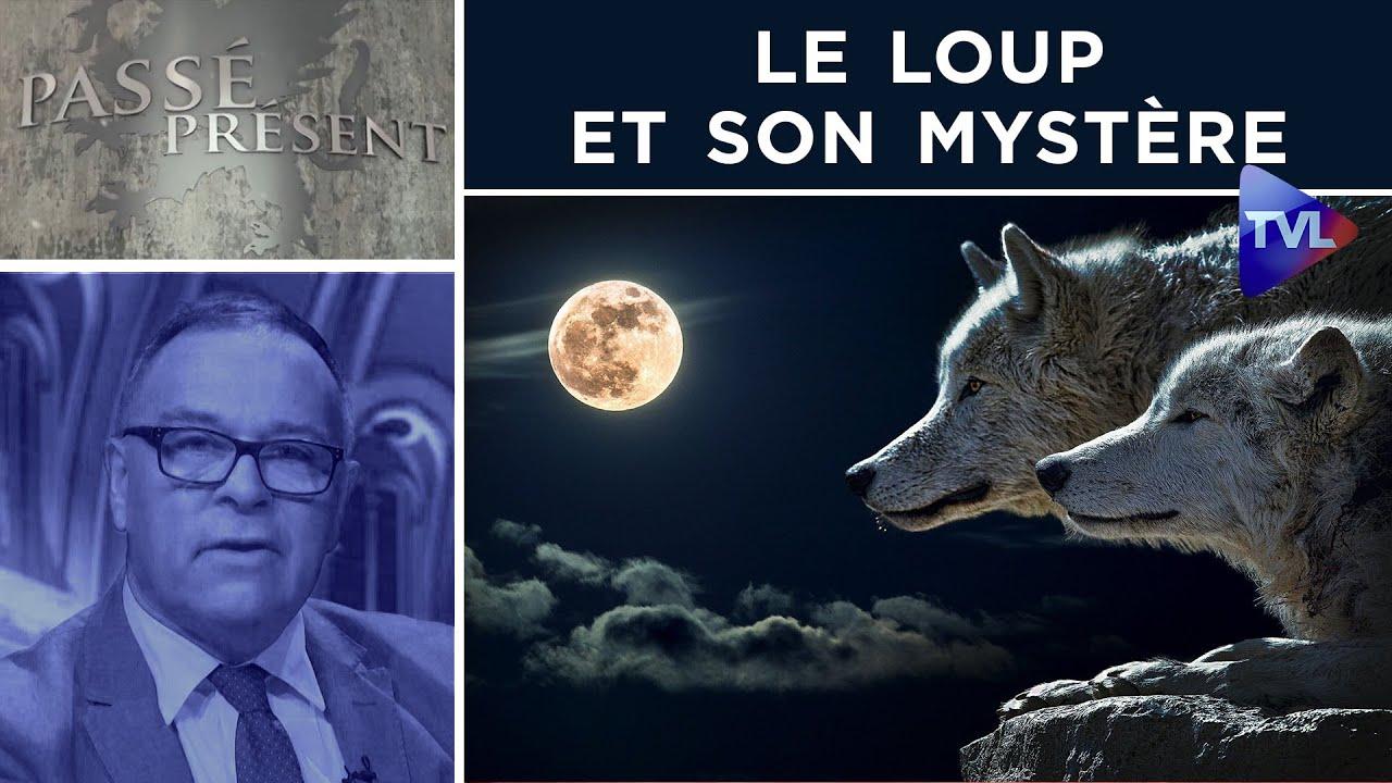 Le loup et son mystère – Passé-Présent n°313 – TVL