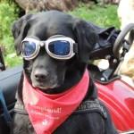 dog-171773_640
