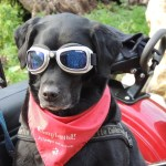 dog-171773_640