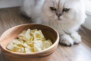 Persian cat with Dried bananas, Thai snack in wooden bowl