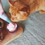 red cat eating cupcakes on the table