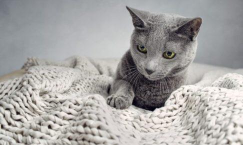 Portrait einer Russisch Blau Rassekatze beim Entspannen auf Decke