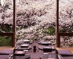 花見 桜 雨 楽しむ方法