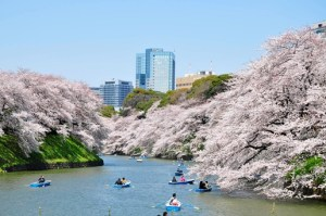 千鳥ヶ淵公園 花見 夜 桜 混雑予想 混雑を回避する方法
